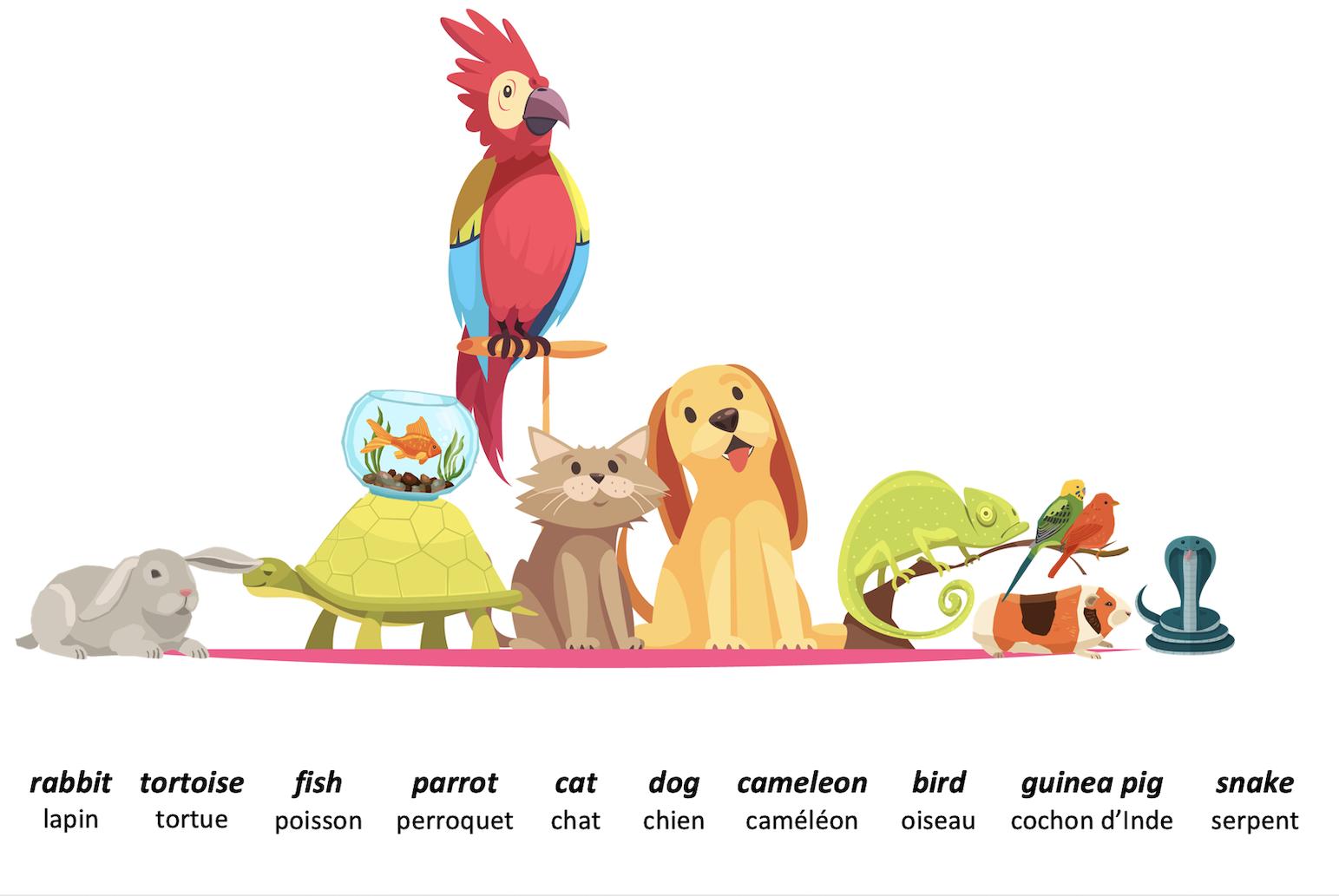 animaux anglais pets