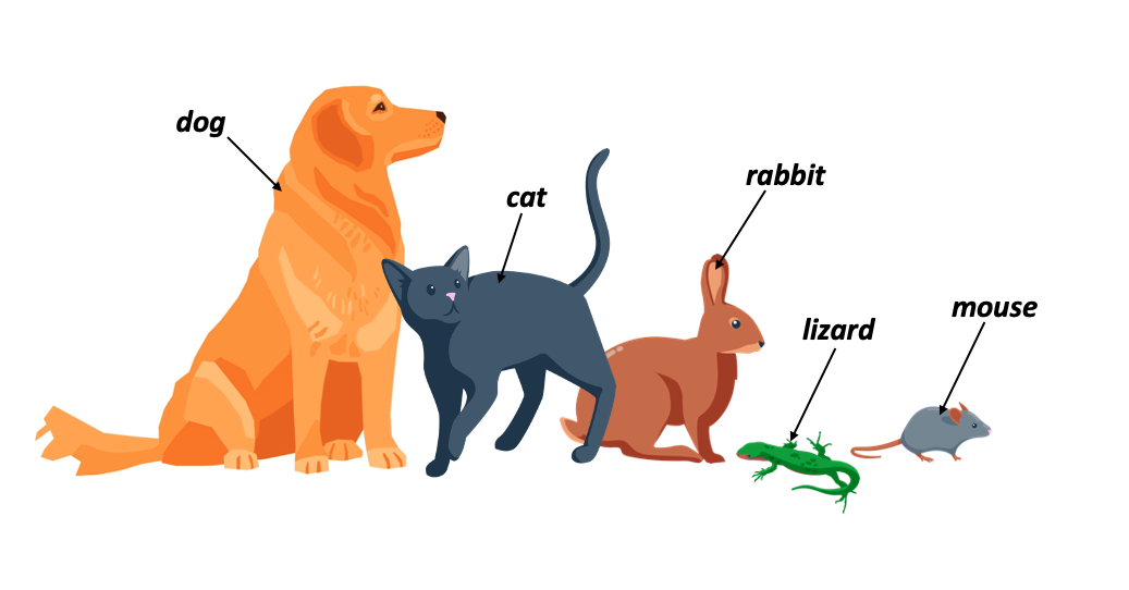 pets animaux compagnie anglais
