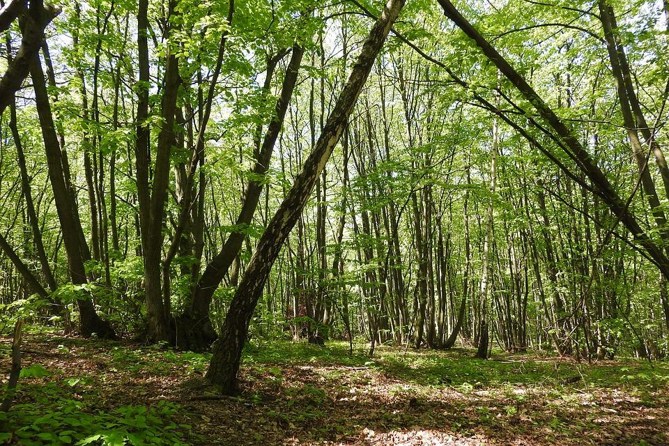 primaire sciences et technologies cm1 diversité de la matière arbres