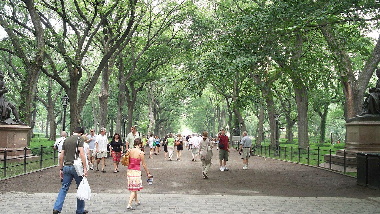 Central Park activités