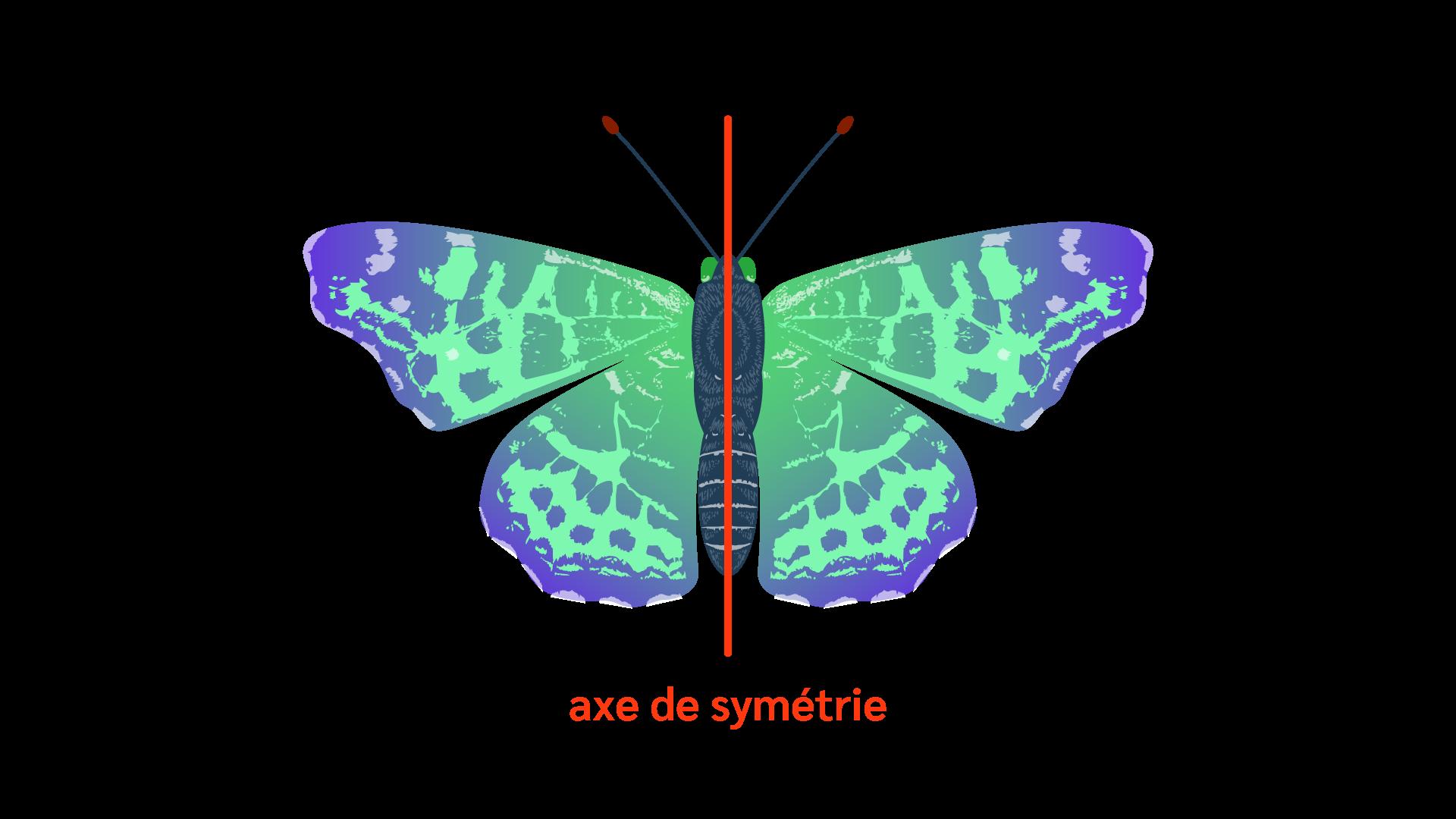 Primaire ce1 mathématiques espace géométrie axe de symétrie papillon