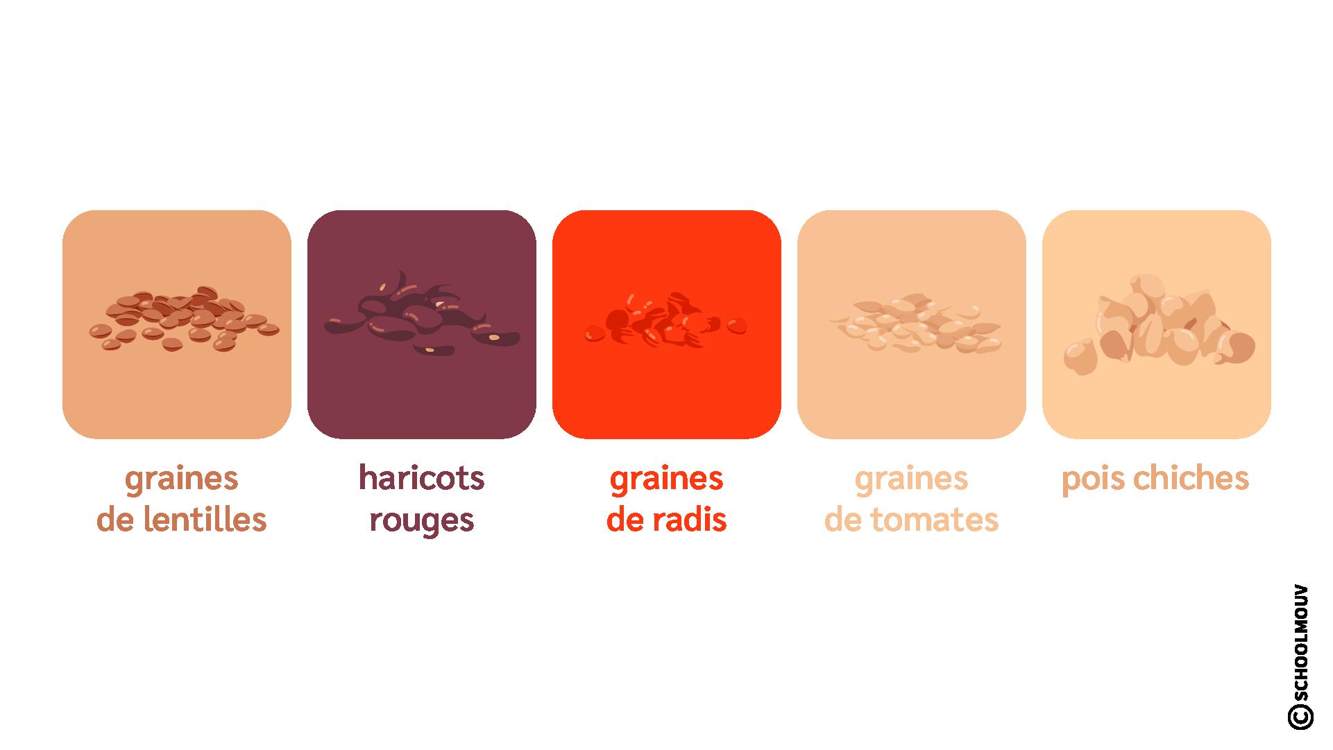 Graines - Plantes - SchoolMouv - Sciences - CE1