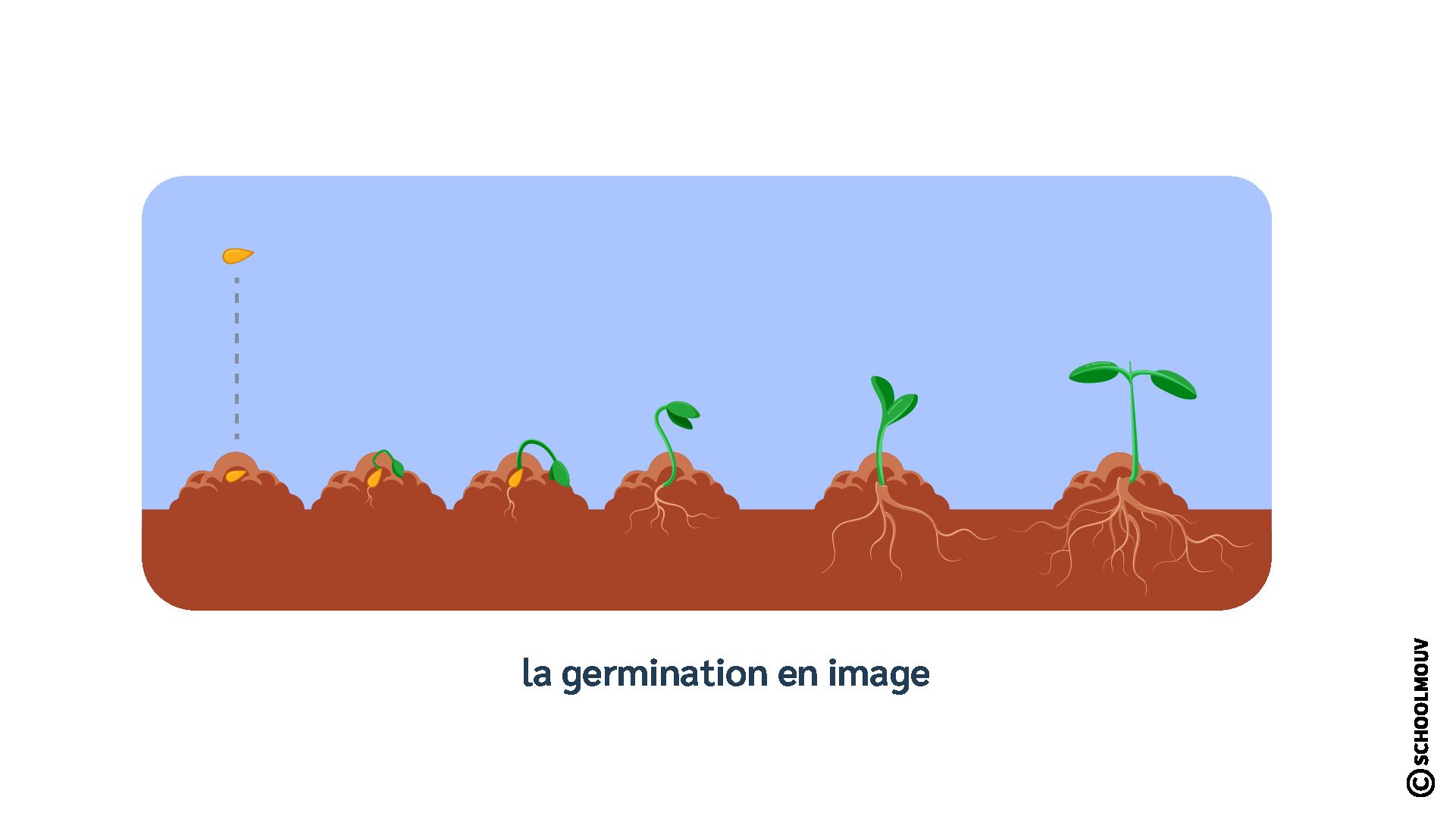 Germination - Plante - Croissance - Végétaux - SchoolMouv - Sciences - CE1