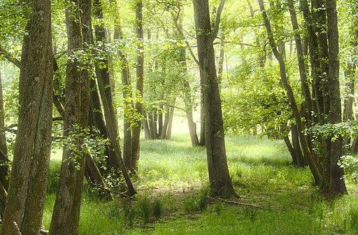 primaire ce2 questionner le monde identifier des paysages forêt