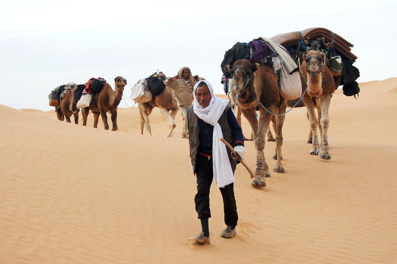 primaire questionner le monde géographie ce2 comparer les modes de vie dromadaire nomade