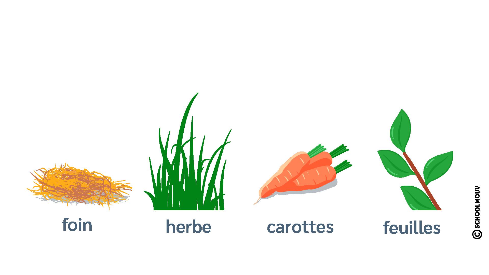 Aliments - Lapin - Régime alimentaire - Foin - Herbe - Carottes - Feuilles - Herbivore - SchoolMouv - Sciences - CE2