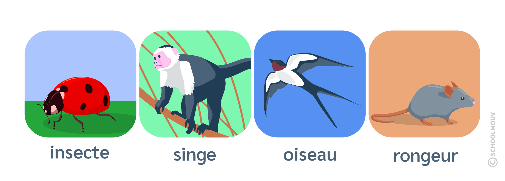 Régime alimentaire - Carnivore - Insecte - Singe - Oiseau - Rongeur - SchoolMouv - Sciences - CE2