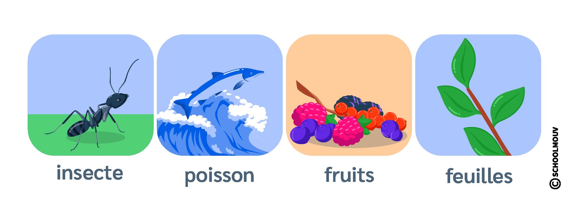 Régime alimentaire - Omnivore - Insecte - Poisson - Fruits - Feuilles - SchoolMouv - Sciences - CE2