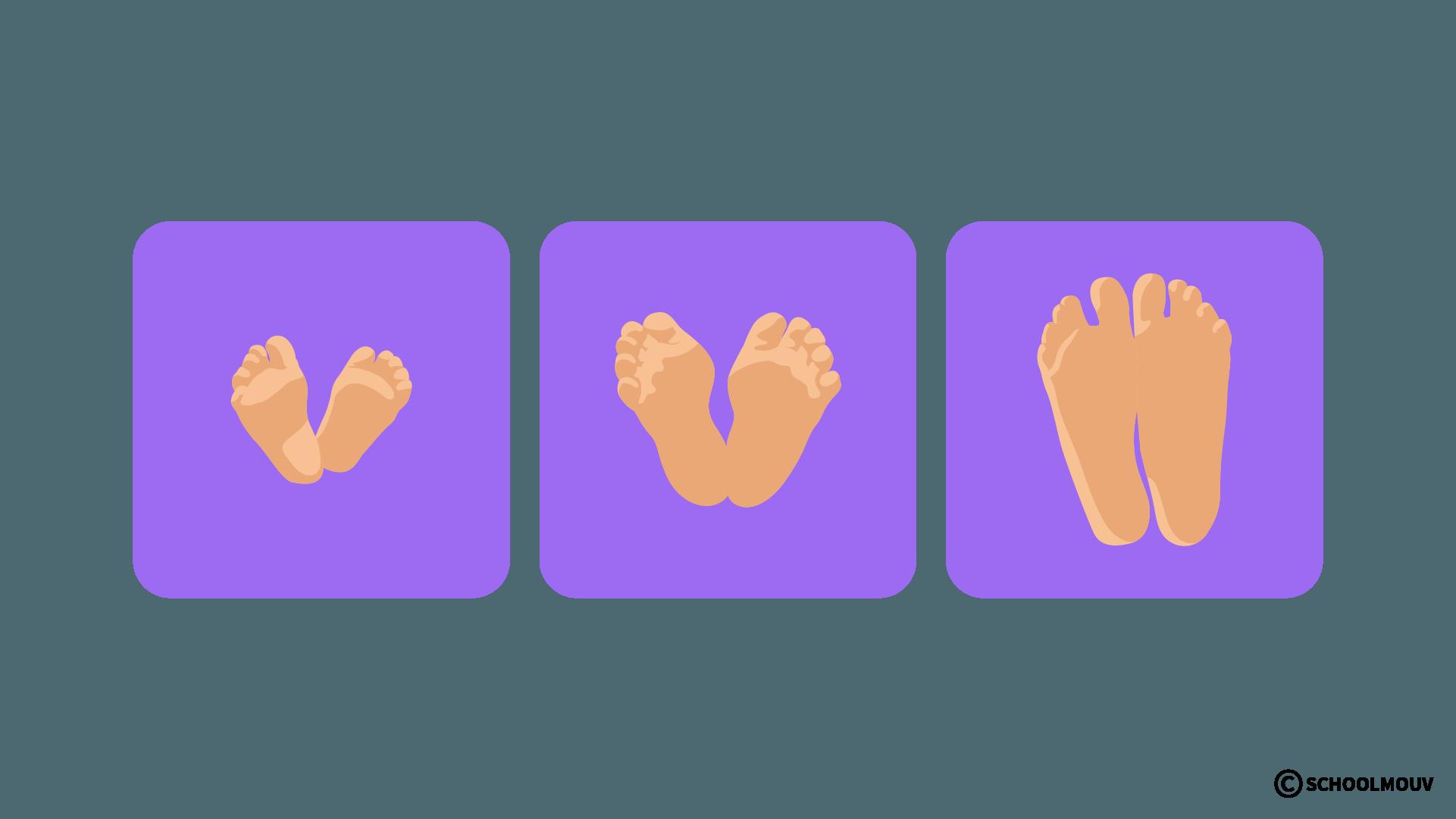 Pieds - Taille - Croissance - Évolution - SchoolMouv - Sciences - CE2