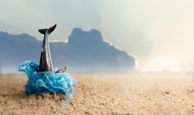 Marina - Baie des anges - Villeneuve-Loubet - Côte d'Azur - Alpes-Maritimes - Mer - Plage - Littoral - Vacances - Tourisme - Été - France - SchoolMouv - Géographie - CM1