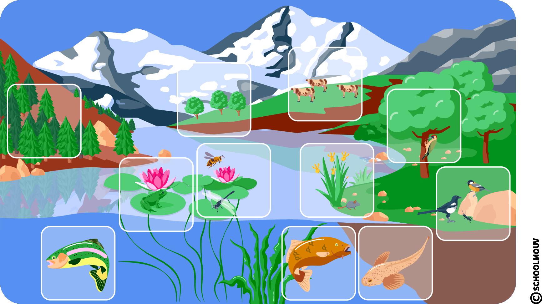 Rivière - Écosystème - Végétaux - Animaux - Lieu de vie - Montagne - Poissons - Oiseaux - Bovins - SchoolMouv - Sciences - CM1