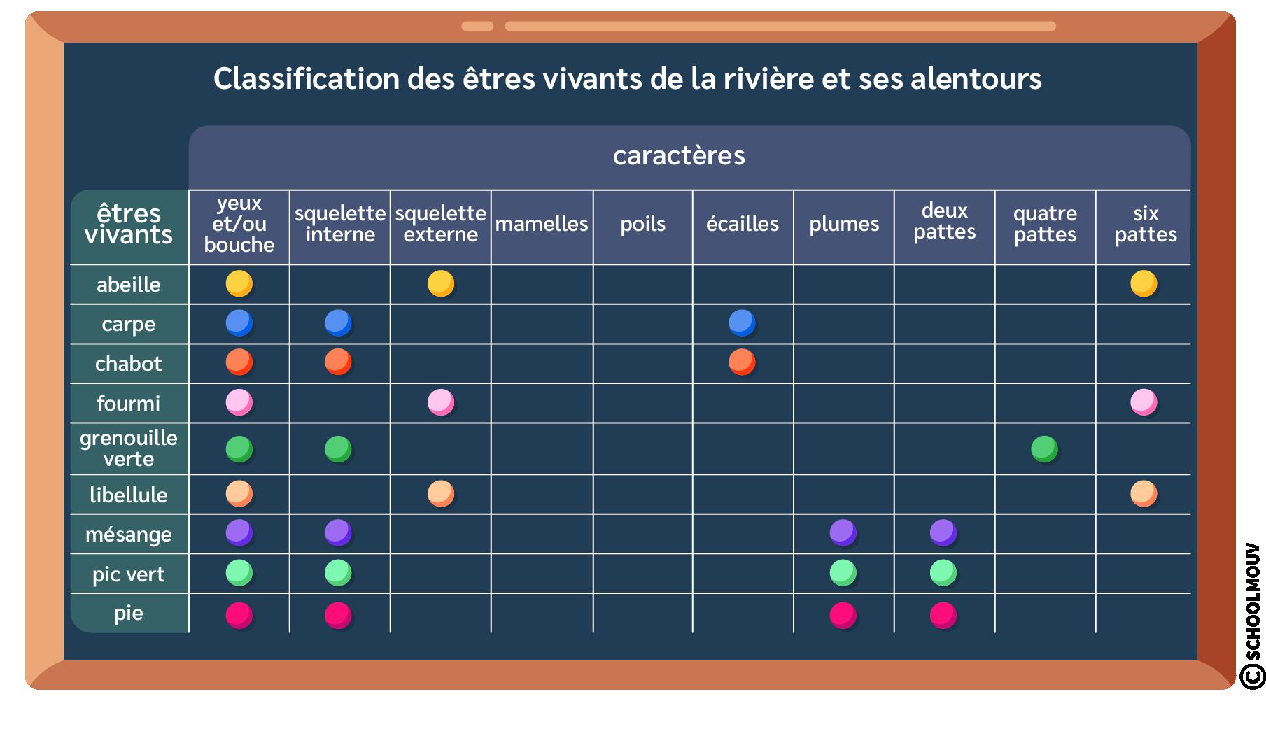 Tableau - Classification - Caractéristiques - Êtres vivants - Rivière - SchoolMouv - Sciences - CM1
