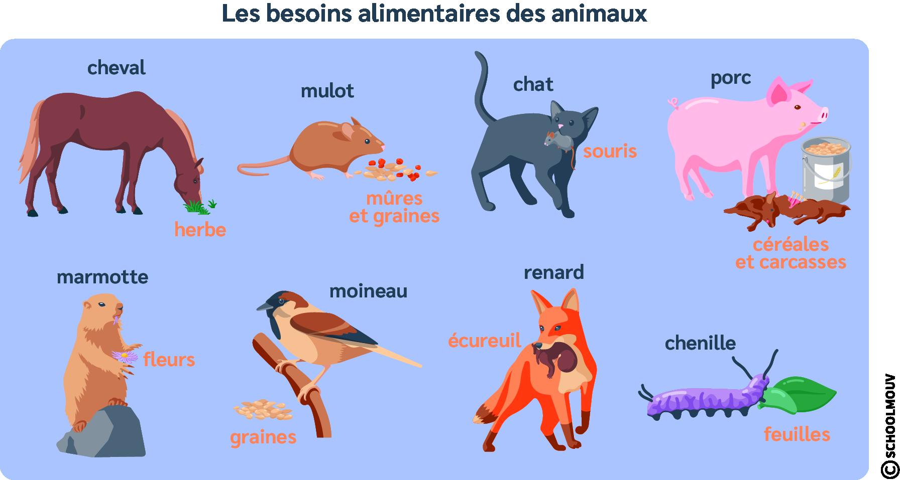 Besoins alimentaires des animaux - Nourriture - Animaux - Régime alimentaire - SchoolMouv - Sciences - CM1