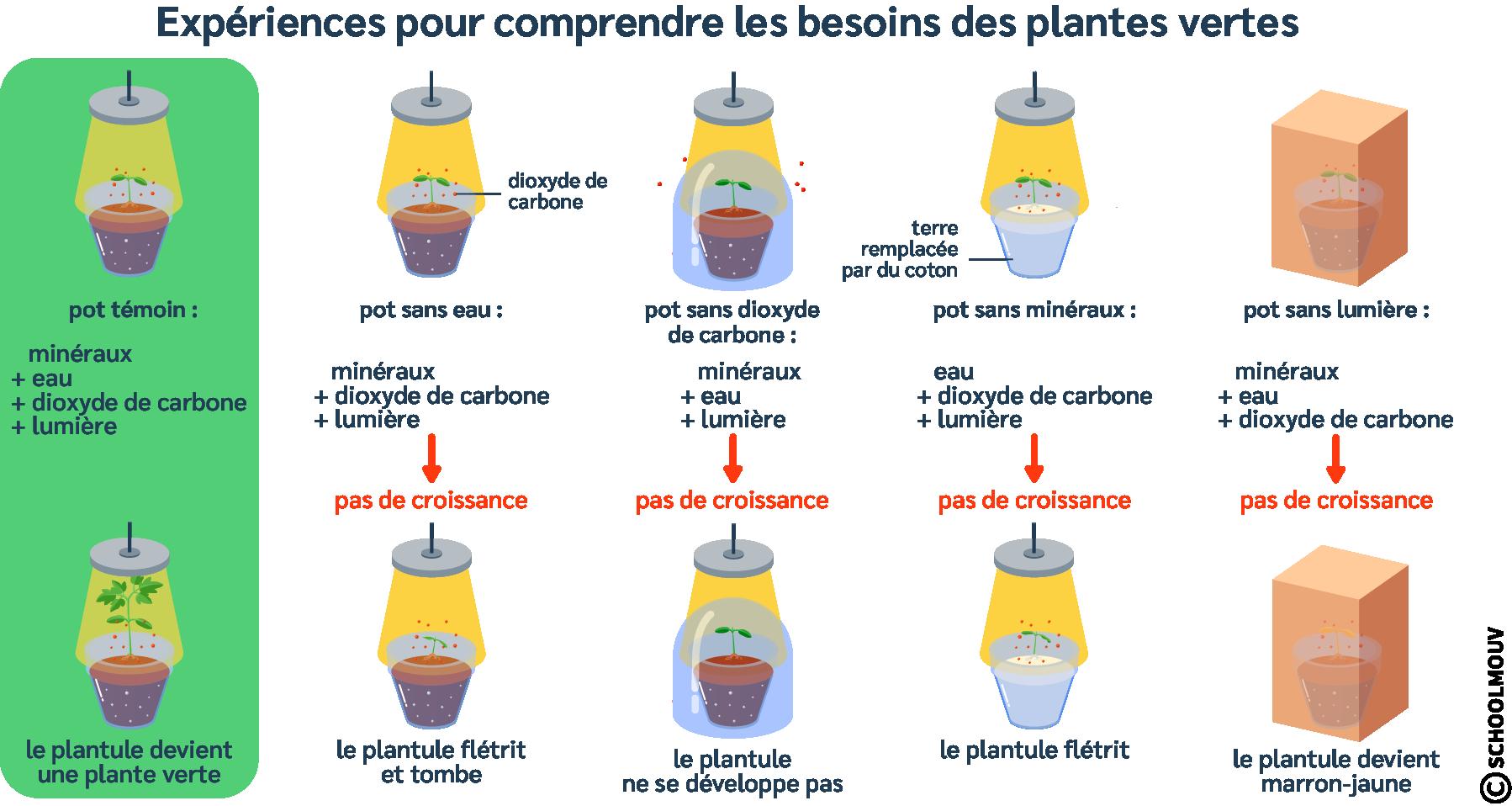 Expériences - Développement de la plante - Croissance de la plante - Eau - Minéraux - Dioxyde de carbone - Lumière - SchoolMouv - Sciences - CM1