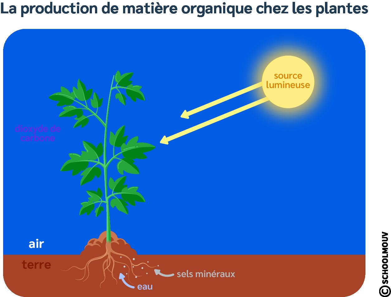 Production de matière organique chez les plantes - Plantes - Végétaux - Besoins - Sels minéraux - Eau - Air - Terre - Dioxyde de carbone - Soleil - SchoolMouv - Sciences - CM1