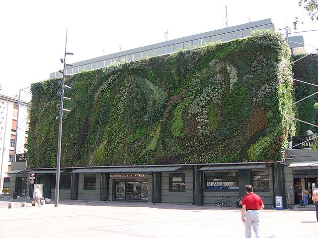Mur végétal - Verdure - Urbain - Ville - Halles - Avignon - France - SchoolMouv - Géographie - CM2