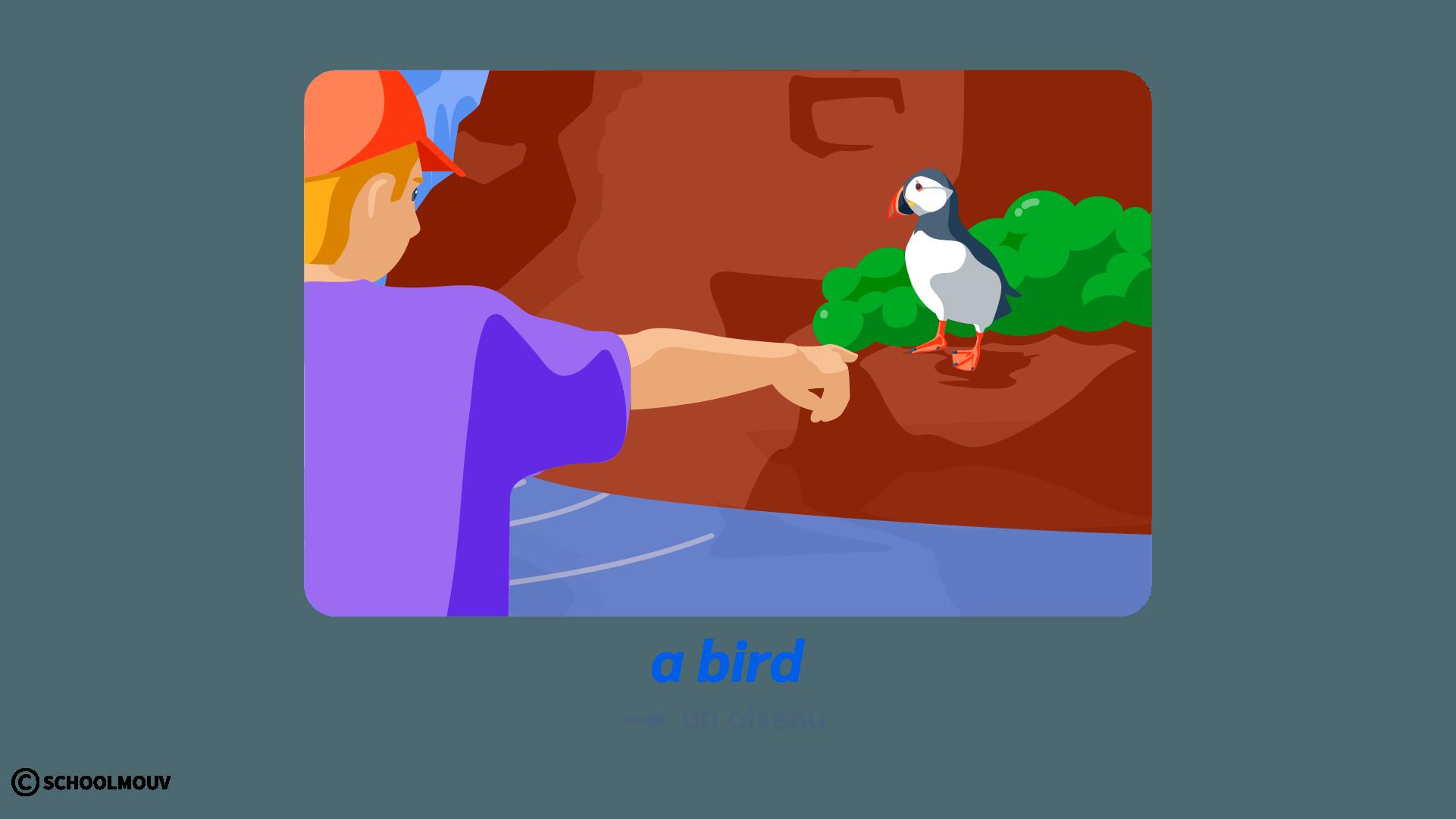 oiseau bird anglais animals