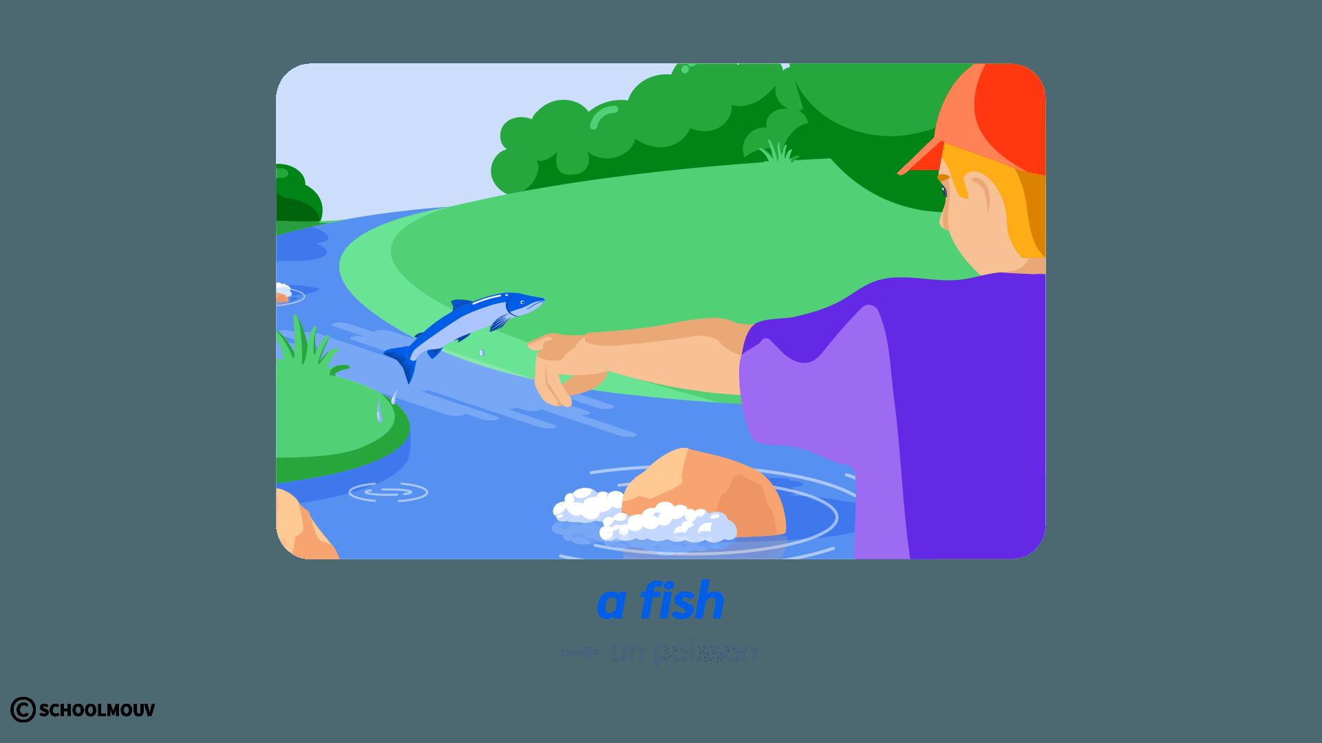 fish poisson anglais animals