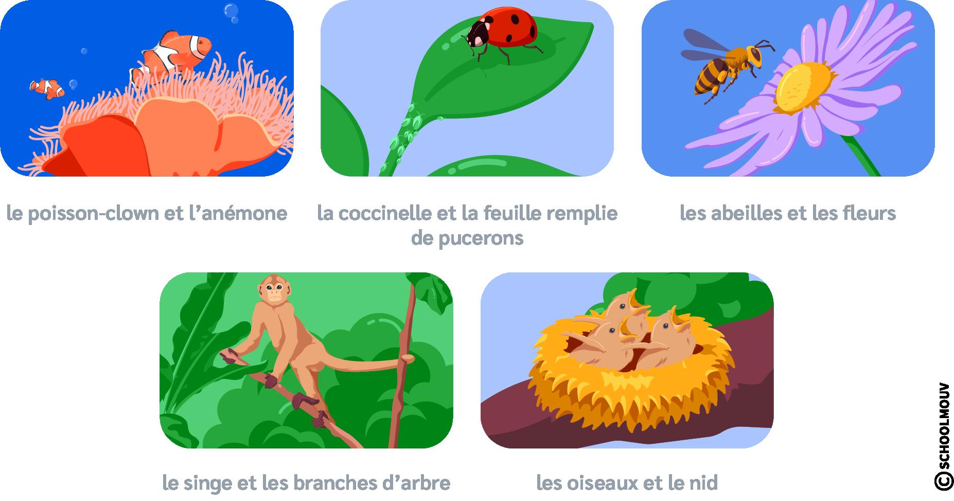 Poisson - Clown - Anémone - Coccinelle - Pucerons - Abeilles - Fleurs - Singe - Branches - Oiseaux - Nid - SchoolMouv - Sciences - CP