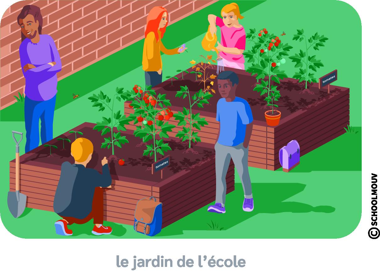 École - Jardin - Plantes - Élèves - Maître - Jardinage - Tomates - SchoolMouv - Sciences - CP