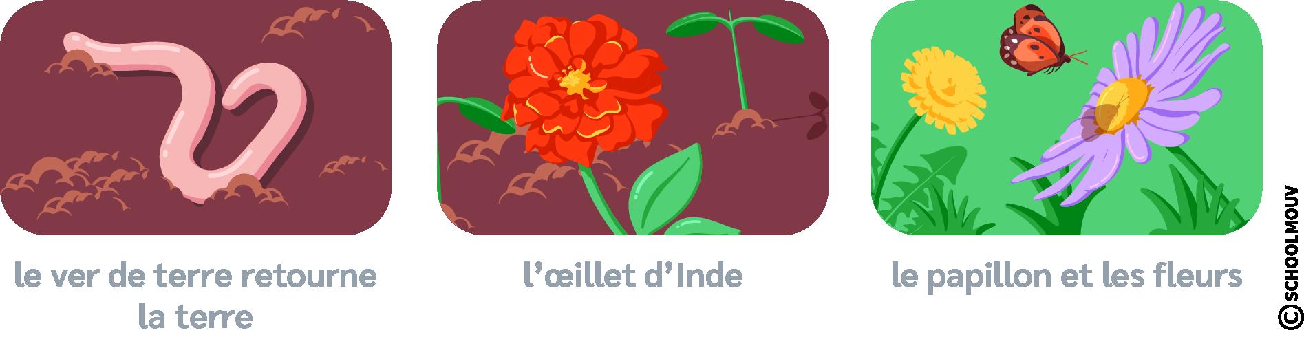 Ver de terre - Fleurs - Papillon - Jardin - SchoolMouv - Sciences - CP
