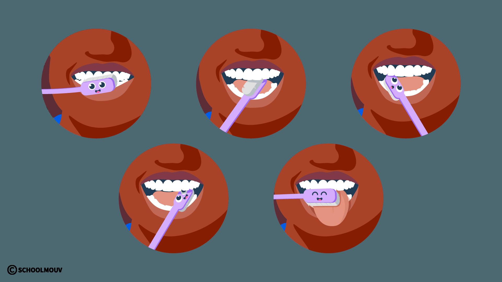 Dentition - Brosse à dents - Hygiène - Bouche - SchoolMouv - Sciences - CP