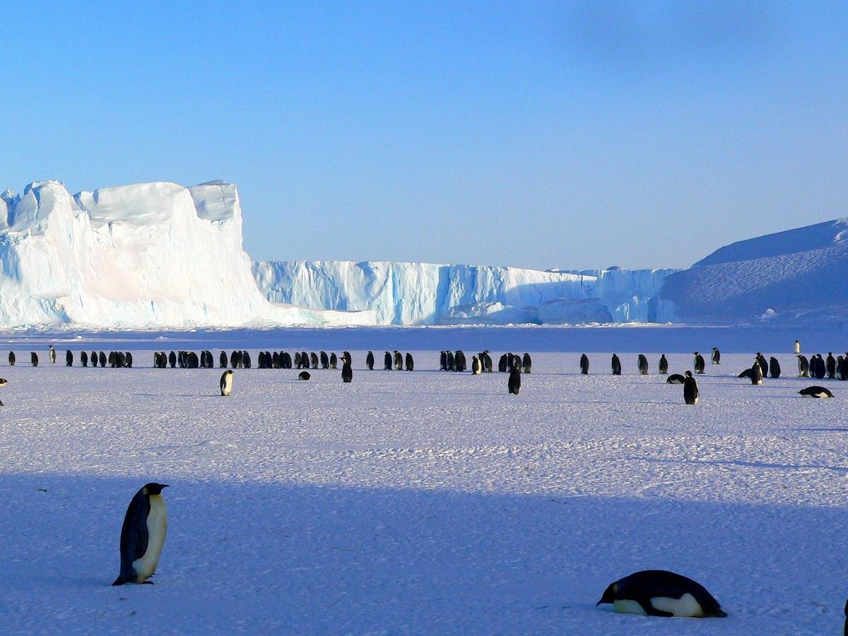 Histoire géographie CE1 Décrire la Terre Antarctique pôles
