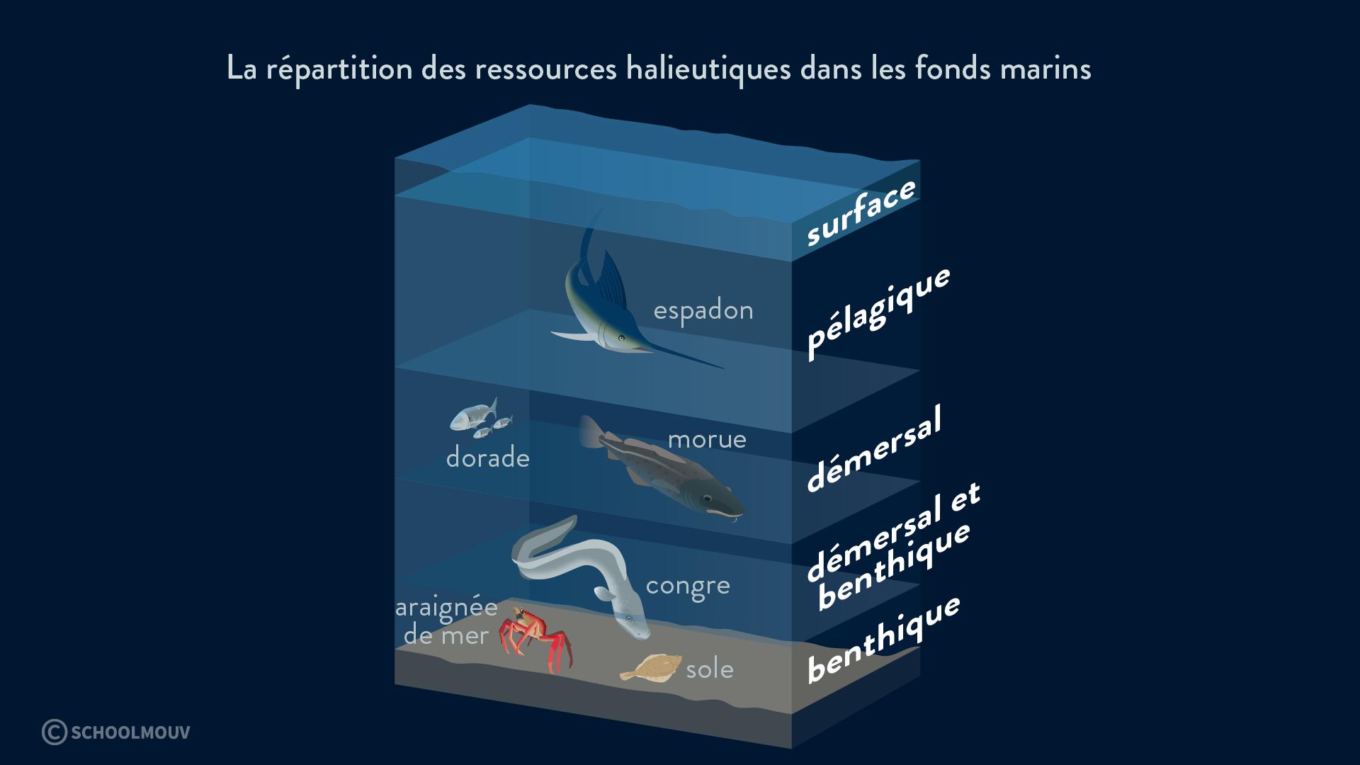 La répartition des ressources halieutiques dans les fonds marins - géographie - terminale - SchoolMouv