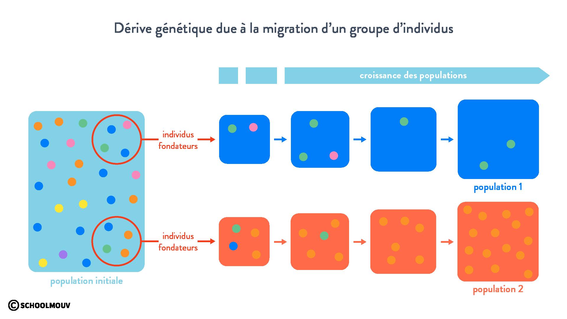 Dérive génétique due à la migration d'un groupe d'individus