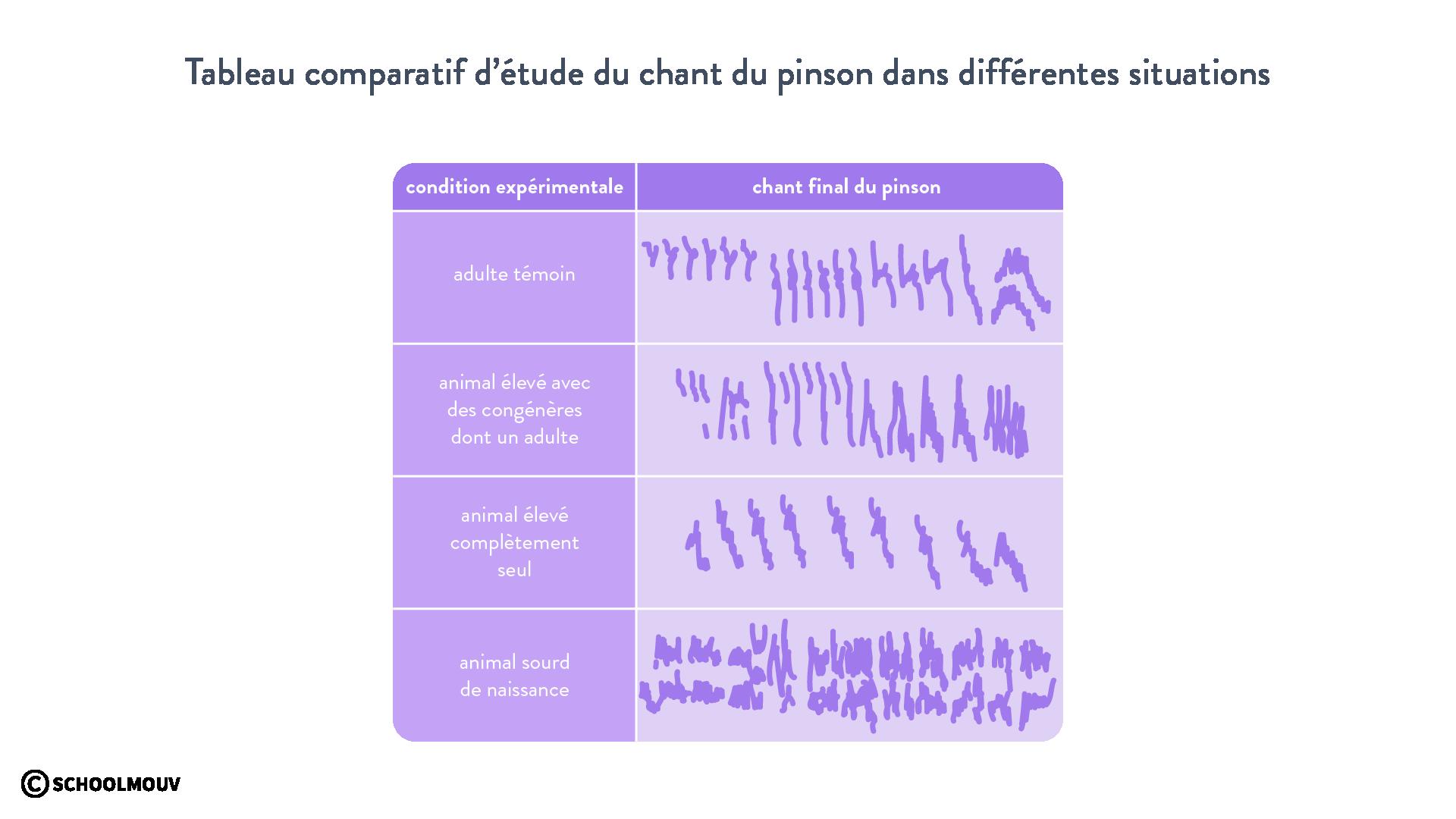 Tableau comparatif d'étude du chant du pinson dans différentes situations