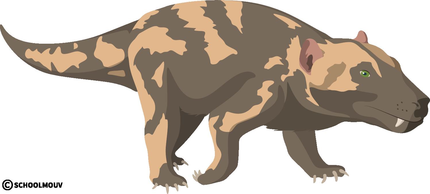 Cynogathus crateronotus