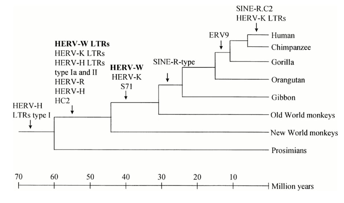 SVT sujet zéro bac terminale tle
